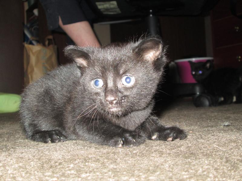 narla's kitten